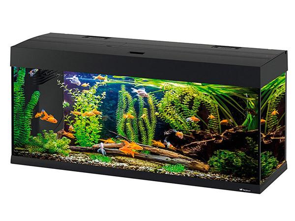 Animalerie tunisie alimentation accessoires aquarium for Accessoire aquarium